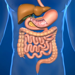Irritable Bowel Syndrome, Gut Microbiota and Probiotics