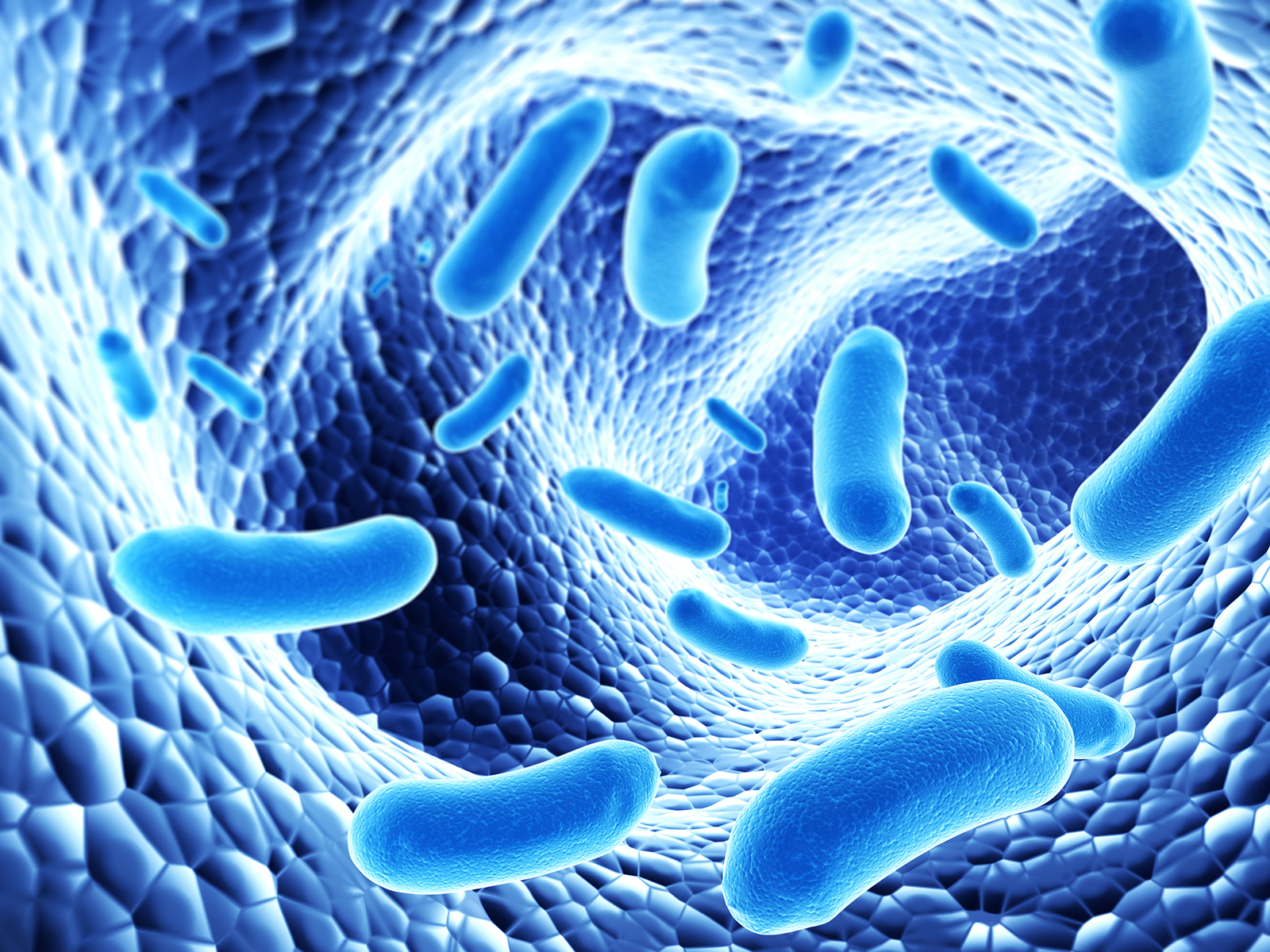 How probiotics are soldiers against illness