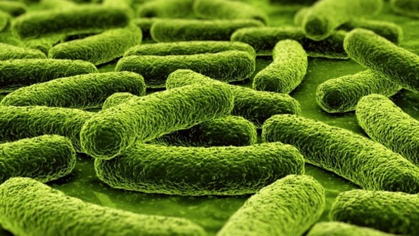 Efficacy of Probiotics, Prebiotics, and Synbiotics in Irritable Bowel Syndrome