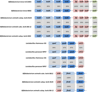 Comparative genomic analysis of the multispecies probiotic-marketed product VSL#3