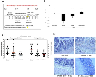 Anti-Inflammatory Lactobacillus rhamnosus CNCM I-3690 Strain Protects against Oxidative Stress and Increases Lifespan in Caenorhabditis elegans