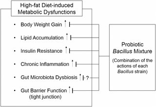 high fat diet effects on body